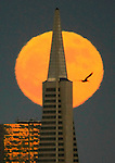 Full moon rising behind the Transamerica Pyramid as seen from Fort Baker Sausalito, California.