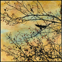 Encaustic photo painting of crow with branch and copper berries.