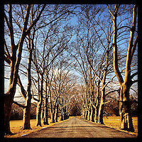 The afternoon sun illuminates the trees lining the driveway at Fonthill in Doylestown, February 6, 2013.