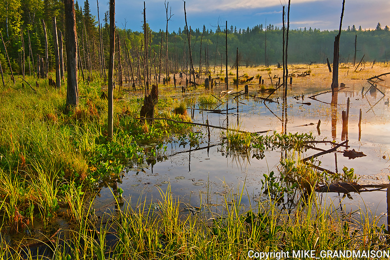 Wetland at sunrise on Kendall Inlet Road<br />
