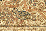 A Byzantine mosaic floor depicting a bird discovered in Beit Kama, the northern Negev