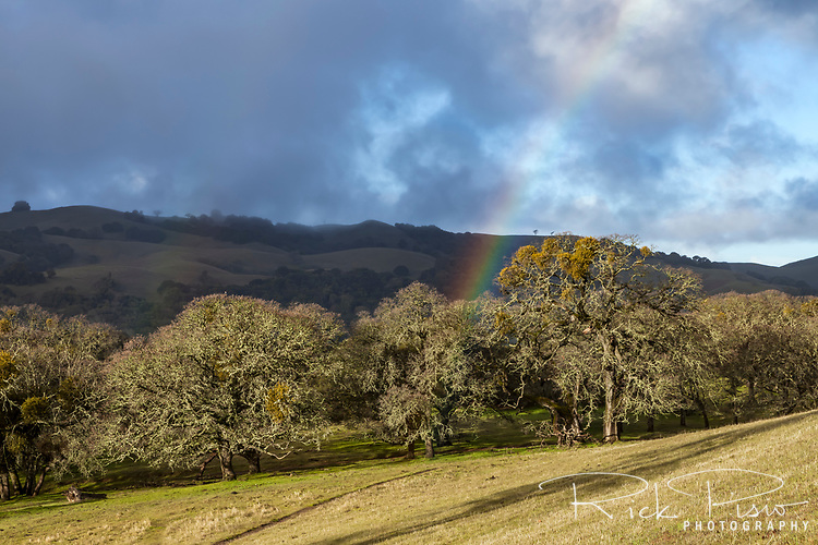 A rainbow appears amongst the blue oak trees at the Morgan Territory Regional Preserve in California's Contra Costa County.
