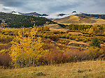 Gallatin National Forest, MT: Autumn colors near Tom Miner Creek and the Gallatin Range in the distance.