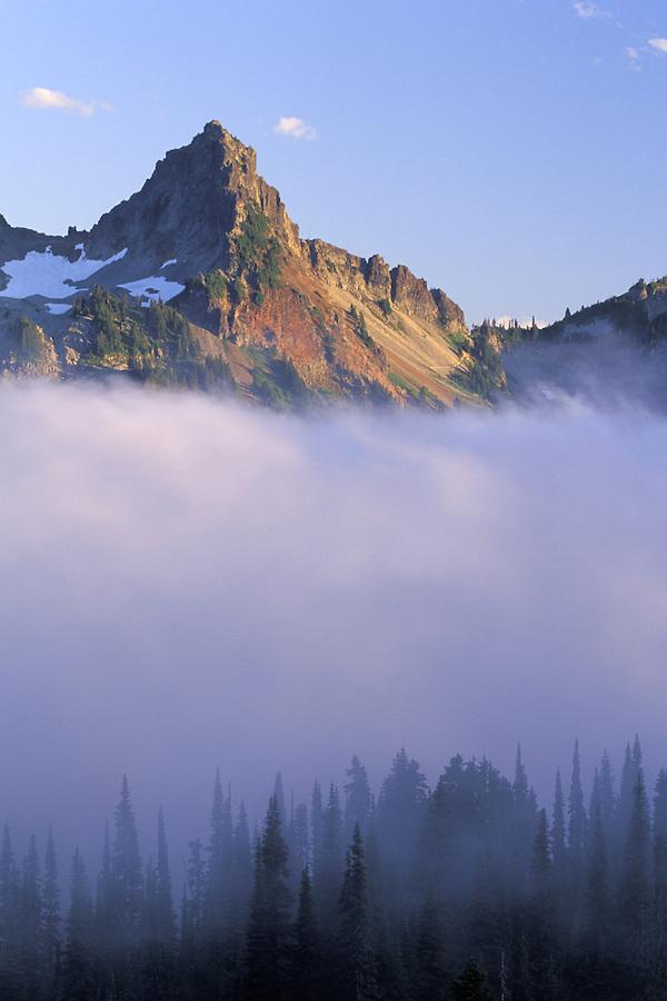 Pinnacle Peak above trees silhouetted against fog, Paradise, Mount Rainier National Park, Cascade Mountains, Washington
