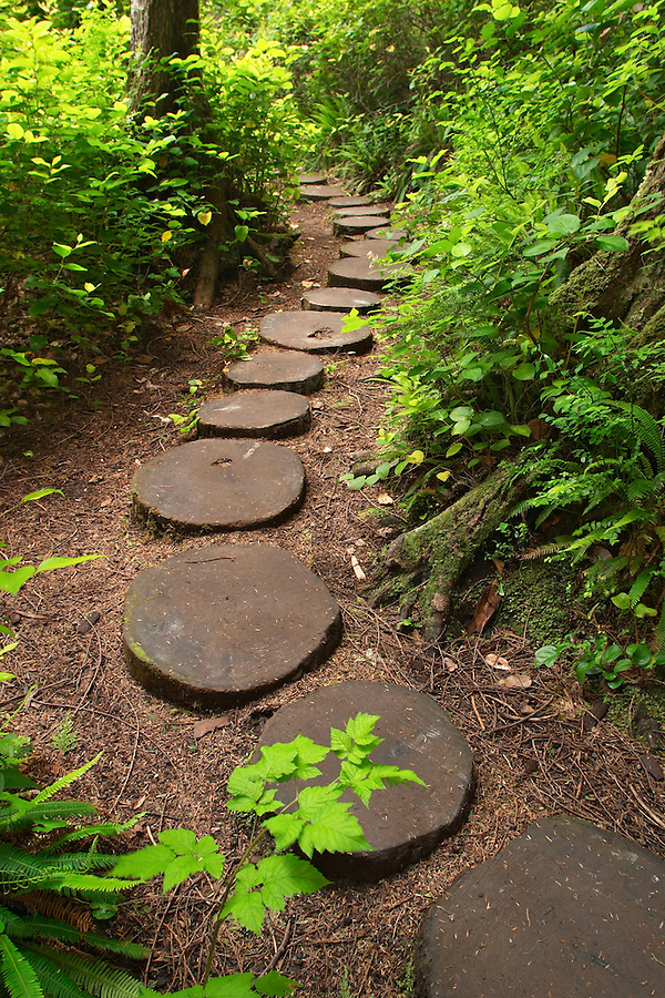 Trail through forest lined with wood stepping stones, Cape Flattery, Makah Indian Reservation, Olympic Peninsula, Clallam County, Washington, USA