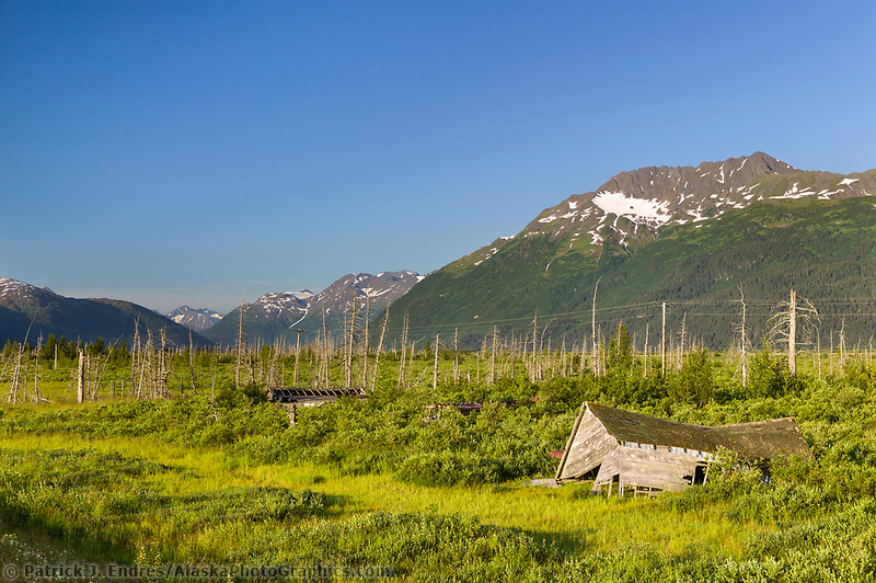 Old collapsed building in the Portage Valley area along the Seward Highway, Turnagain Arm, Alaska. Dead trees are the result of the 1964 earthquake where land subsided and vegetation was poisoned with salt water and died.