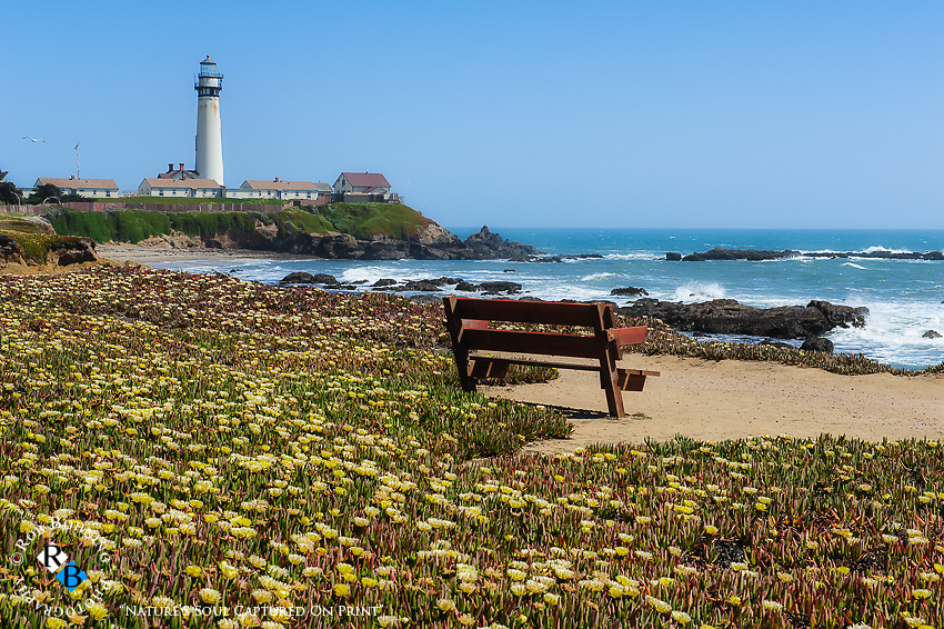 Ice Plant covers the dunes surrounding the rugged coastline at the Pigeon Point Lighthouse