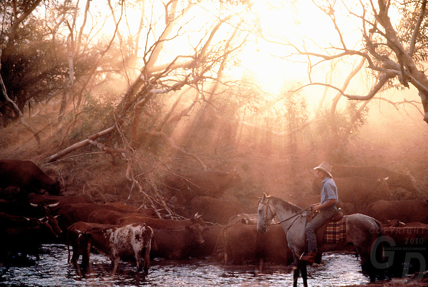 Images from the Book Journey Through Colour and Time, The last light of the day. Cattle mustering in the Outback of Australia. Central Australia