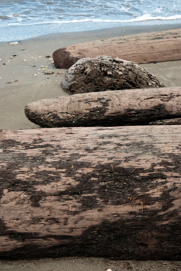 Aangespoeld hout aan de Caribean coastline, Cahuita - Costa Rica