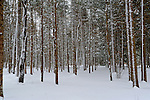 View of Snowy Winter Woods in Rural Marlow, New Hampshire