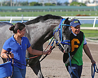 HALLANDALE BEACH, FL - JULY 01:   Scenes from  Summit Of Speed Day at Gulfstream Park on July 01, 2017 in Hallandale Beach, Florida. (Photo by Liz Lamont/Eclipse Sportswire/Getty Images)
