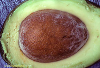 SE15-001b  Avocado seed and sliced fruit
