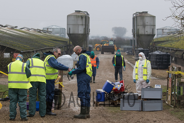 Defra officials dealing with an outbreak of H5N8 Bird Flu near Boston Lincolnshire <br /> Picture Tim Scrivener 07850 303986<br /> tim@agriphoto.com<br /> &hellip;.covering agriculture in the UK&hellip;.