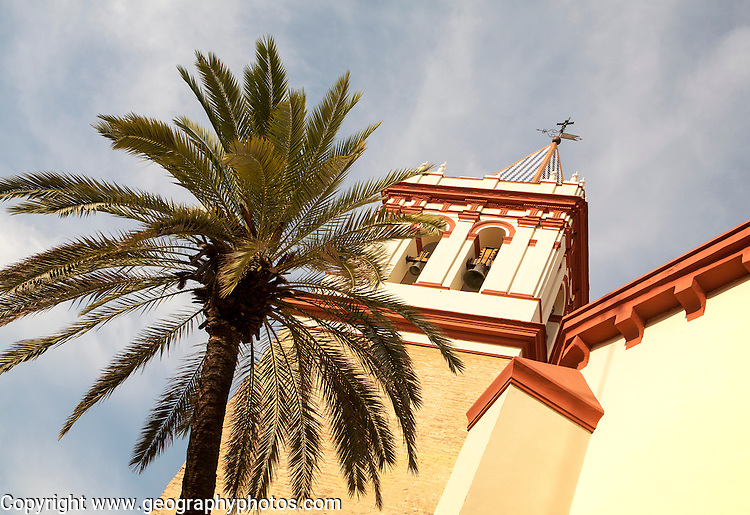 Date palm tree and tower of Basilica de la Macarena, Barrio Macerana, Seville, Spain