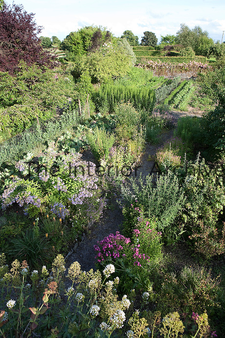 A gravel path runs throughout the garden, hidden amongst the thriving foliage