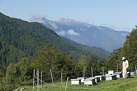 In the bear-reintroduction area of the Pyrenees, electrified fences were installed to prevent attacks on apiaries in the medium mountains from mid-May to late September.