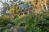 Le domaine du Rayol en f&eacute;vrier :  le jardin sud-africain,la pergola et de gauche &agrave; droite cycadale?, Strelitzia nicolae, diff&eacute;rents alo&egrave;s, polygale &agrave; feuilles de Myrte (Polygala myrtifolia)...<br /> <br /> (mention obligatoire du nom du jardin &amp; pas d'usage publicitaire sans autorisation pr&eacute;alable)