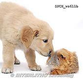 Xavier, ANIMALS, REALISTISCHE TIERE, ANIMALES REALISTICOS, FONDLESS, photos+++++,SPCHWS611B,#A#