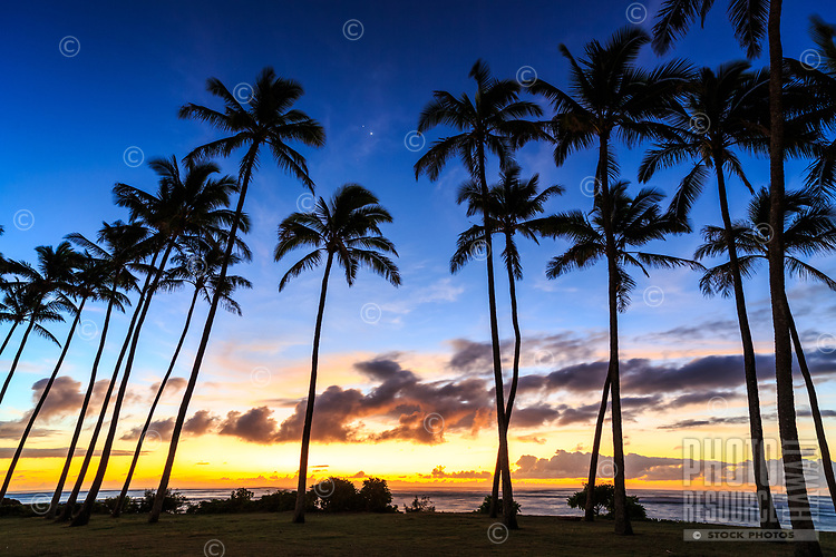 Palm trees in Kapa'a town stand below Venus, Jupiter and Mars shining in a cluster in the early morning Kaua'i sky.