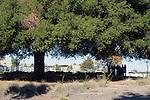 Visit to Sykes Ranch Park along Murrieta Creek, in Murrieta, CA, on Sunday, November 29, 2015.  Photo by Jim Peppler. Copyright Jim Peppler 2015.