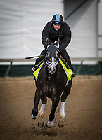 LOUISVILLE, KY - MAY 03: Tapwrit gallops at Churchill Downs on May 03, 2017 in Louisville, Kentucky. (Photo by Alex Evers/Eclipse Sportswire/Getty Images)