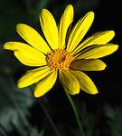 January Yellow