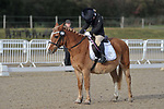 Class 1. Unaffiliated dressage. Brook Farm Training Centre. Essex. UK. 27/10/2018. ~ MANDATORY Credit Garry Bowden/Sportinpictures - NO UNAUTHORISED USE - 07837 394578