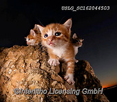 REALISTIC ANIMALS, REALISTISCHE TIERE, ANIMALES REALISTICOS, cats, paintings+++++,USLGSC162044503,#A#, EVERYDAY ,photos,fotos,pounce,cat,cats,kitten,kittens,Seth