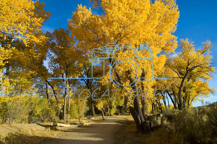 Fall colors surround the trail through Riverview Park in Carson City, Nev., on Oct. 21, 2009..Photo by Cathleen Allison.
