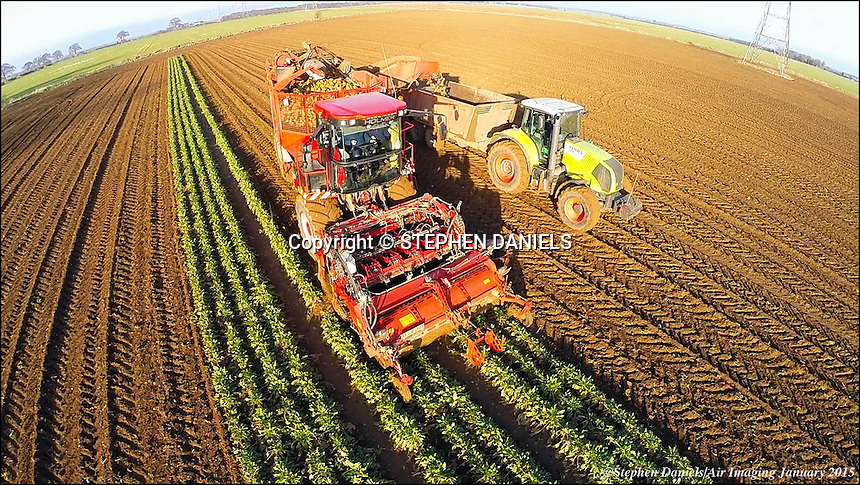 Photo by © Stephen Daniels/Air Imaging 27/01/2015 <br /> Holmer Beat Harvester & JCB Fast Track at work on Aubourn Farm, ear Lincoln, Lincs