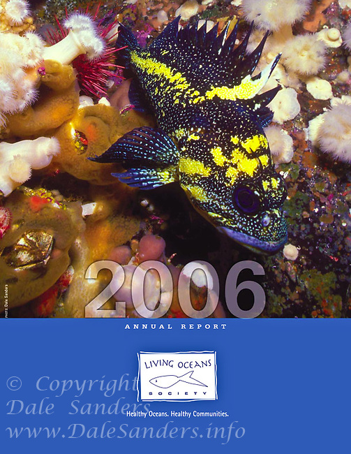 2006 Annual Report Cover for Living Oceans Society.