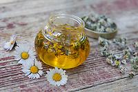 Gänseblümchen-Öl, Gänseblümchenöl, Gänseblümchen werden in Öl ausgezogen, Auszug aus Gänseblümchen-Blüten, Ölauszug, Heilöl, Ausdauerndes Gänseblümchen, Mehrjähriges Gänseblümchen, Maßliebchen, Tausendschön, Bellis perennis, English Daisy, common daisy, lawn daisy, oil, la Pâquerette, la pâquerette vivace
