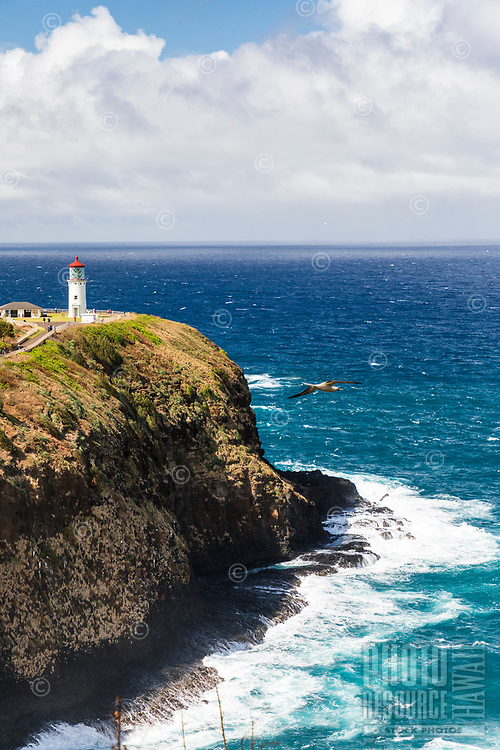 The Kilauea Lighthouse at Kilauea Point National Wildlife Refuge with seabird at center, northern Kaua'i.