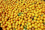 Florida grows the most citrus in the world. Oranges brought by flat bed truck wait to be juiced at an orange processing factory