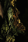 Lights on the wet surface of the stalagmites in Howe Cavern glow irridecent green and gold.