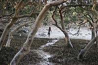 Aborigine family hunts for mud crabs at low tide in mangrove swamp area at Town Beach in Broome.
