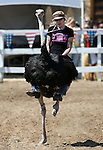 Karla Burrell races in an ostrich race during the 54th International Camel Races in Virginia City, Nev., on Friday, Sept. 6, 2013.  <br /> Photo by Cathleen Allison