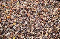 Seashells, Peconic Bay, NY