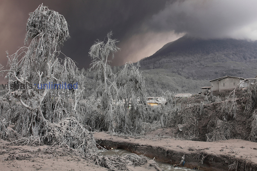 Vegetation and landscape covered in volcanic ash from Sinabung Volcano, Indonesia
