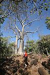 Baobabs au sud de Mayotte