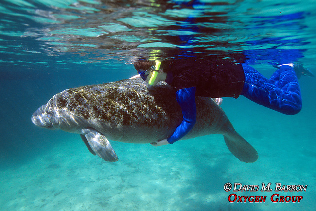 Person Holding Manatee