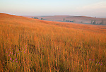 tallgrass prairie in autumn, Tallgrass Prairie National Preserve, Kansas