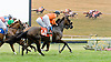 Hi Ho Bambino winning The International Ladies Fegentri race at Delaware Park on 6/11/12