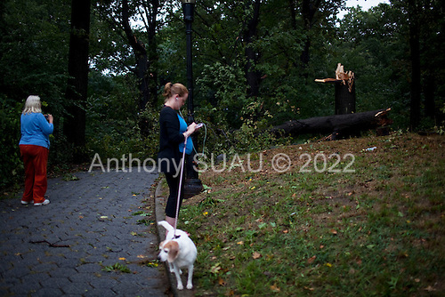 New York, New York<br /> September 16, 2010<br /> <br /> Park Slope after a severe storm and possible tornado. An uprooted tree inside Prospect Park.