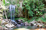 Curtis Falls, Tamborine Mountain National Park, Queensland