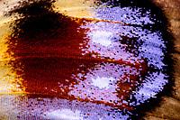 Tagpfauenauge, Flügel, Flügelausschnitt, Schuppen, Flügelschuppen, Tag-Pfauenauge, Aglais io, Inachis io, Nymphalis io, peacock moth, European peacock, peacock, peacock butterfly, Le Paon du jour