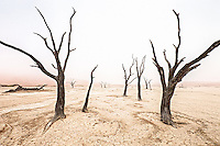Dead trees in the mist at the famous Dead Vlei in the Namib Desert.