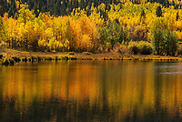Changing aspen leaves in Colorado's high country  reflect in the waters of a small lake.