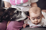Young girl on couch getting kissed by a Pit Bull dog Marysville Washington State USA