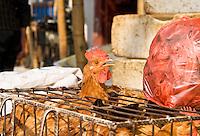 Chicken sticking head through cage in Chinese market, Shanghai